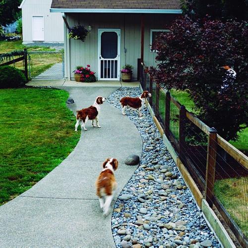 8 Dogfriendly Backyard Ideas  Healthy Paws