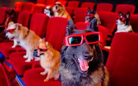 K9 Movie Night