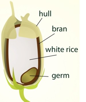 What is Brown Rice rice with bran hand threshed rice