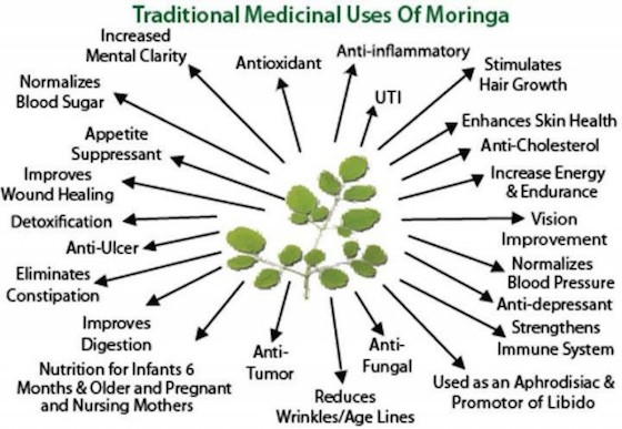 Moringa-Oleifera-Benefits-