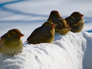 birds in snow, winter, healthy spirituality.org