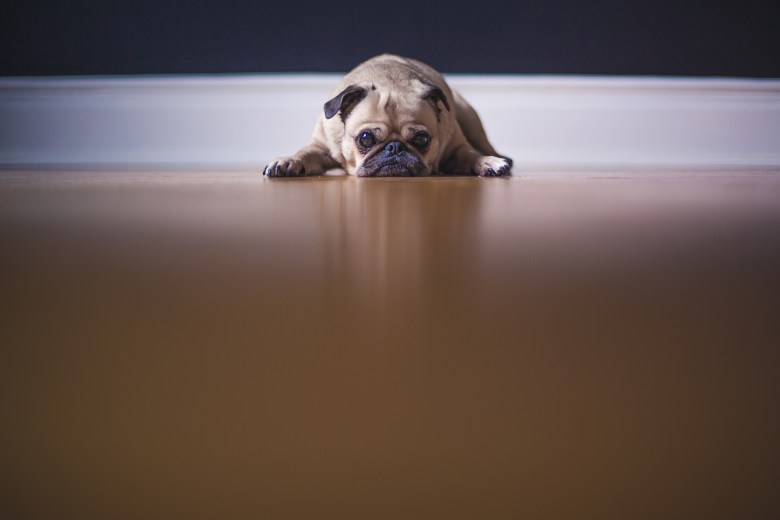 A dog feeling depressed and anxious about life