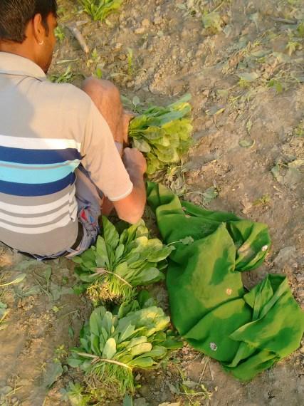 The Generous Farmer