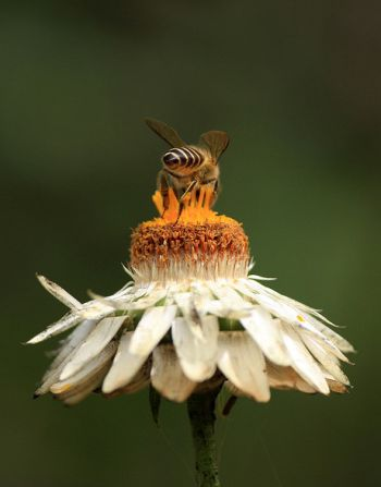 bees and honey in history