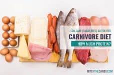 carnivore protein