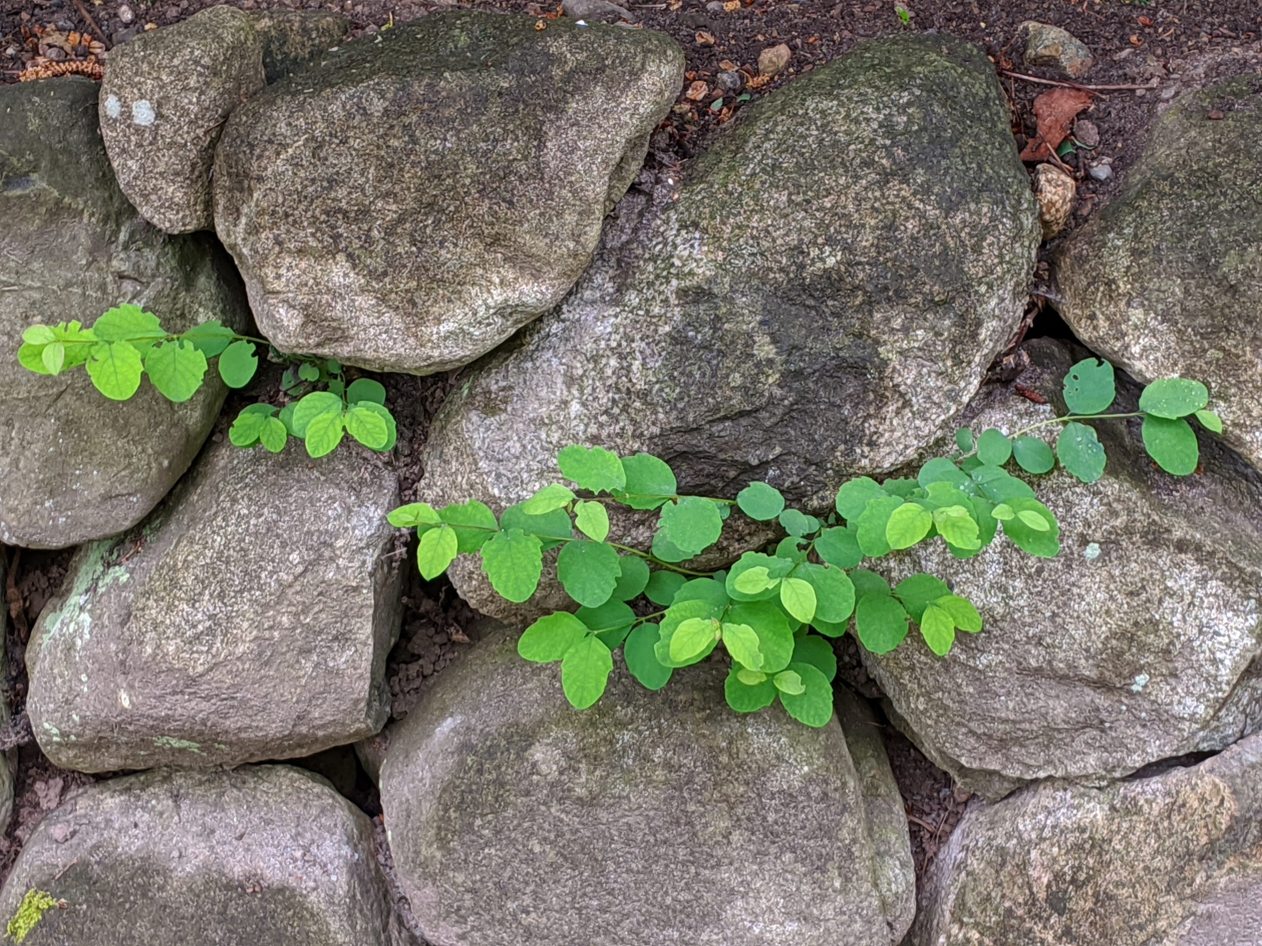 How to grow in rocky places