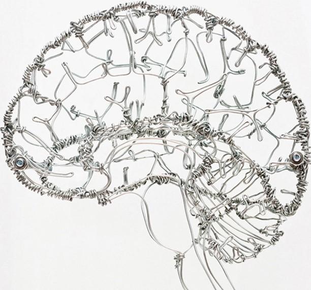 Federico-Carbajal-brain