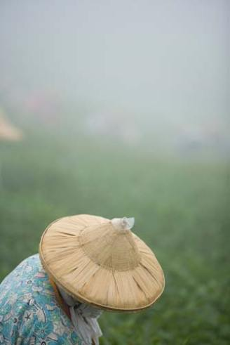 Alishan, Taiwan: woman in countryside, photo by Jake Warga