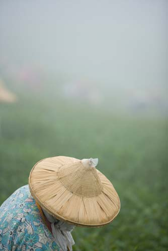 Alishan, Taiwan: woman in countryside, photo by Jake Warga