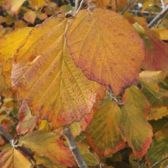 Herfstbladeren foto Liesbeth Duits