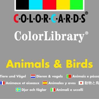 Colorcards - ColorLibrary - Animals & Birds
