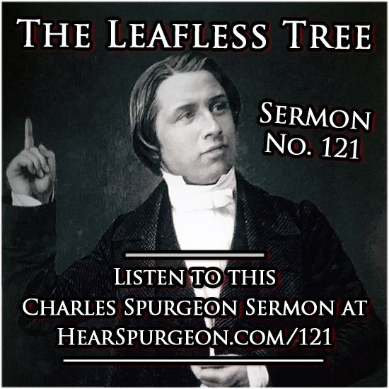 121 sermon, leafless tree, isaiah 6, spurgeon audio, charles,