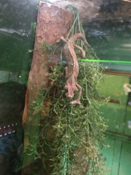 Lizard (of some sort)