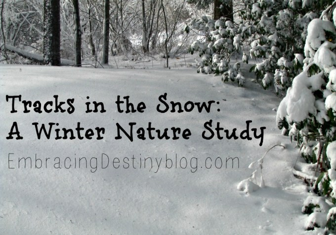 Tracks in the Snow: A Winter Nature Study at heartandsoulhomeschooling.com