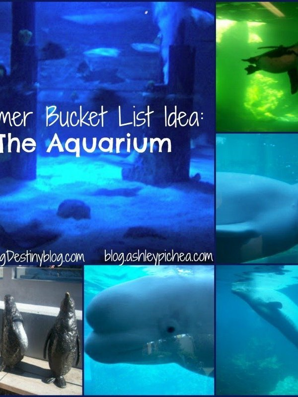 Summer Bucket List Idea: A Visit to the Aquarium