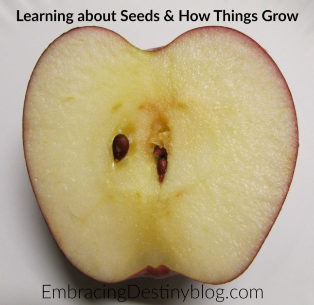 Learning about seeds and how fruits & vegetables grow with Christian Kids Explore Biology. heartandsoulhomeschooling.com