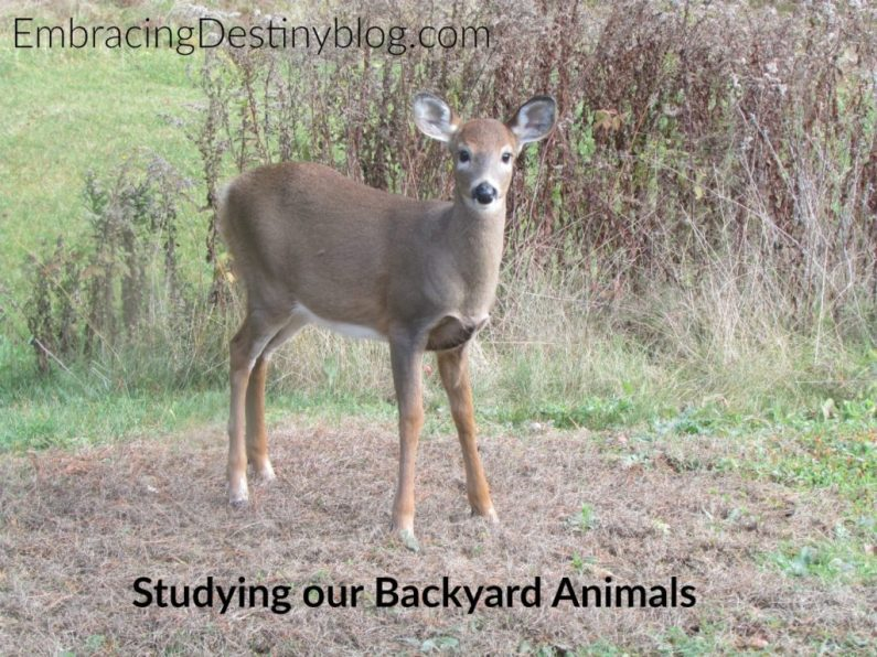 Observing backyard animals with Christian Kids Explore Biology at heartandsoulhomeschooling.com