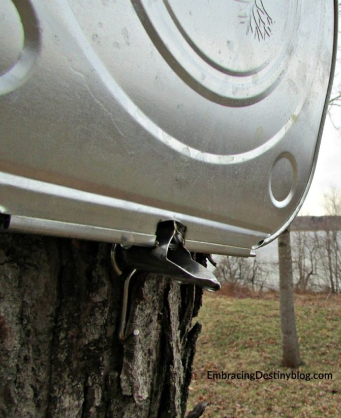 maple sugaring closeup