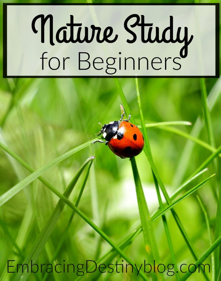 Tips for nature study for beginners. How-to for homeschoolers. heartandsoulhomeschooling.com