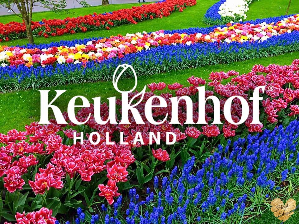 Keukenhof Feature Image