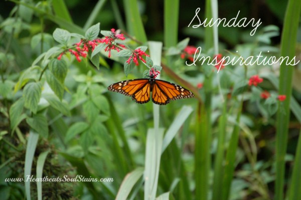 Sunday Inspirations week one sharing quotes, scriptures, sayings, photos and lyrics that have inspired me