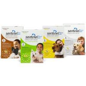Protection from fleas and tapeworms