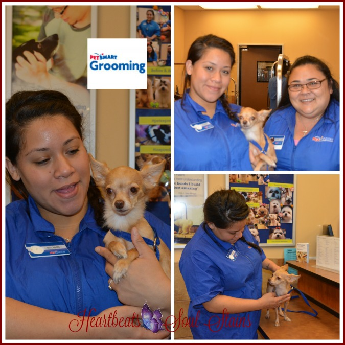 Sofia & the gang PetSmart Grooming