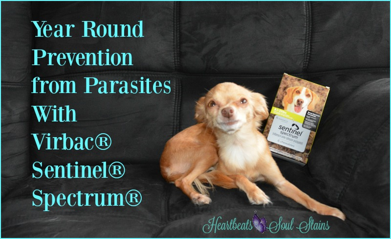 Year round prevention from parasites with Virbac® Sentinel® Spectrum®