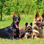 The Best Dog Breeds In The US