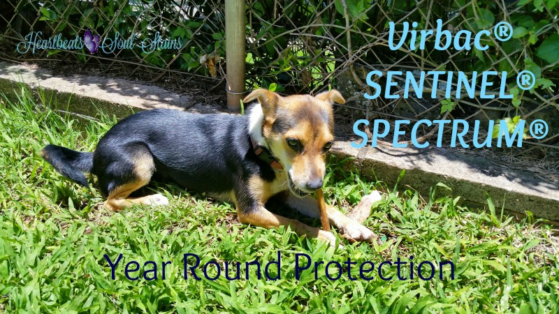year round protection from fleas and tapeworms and other parasites