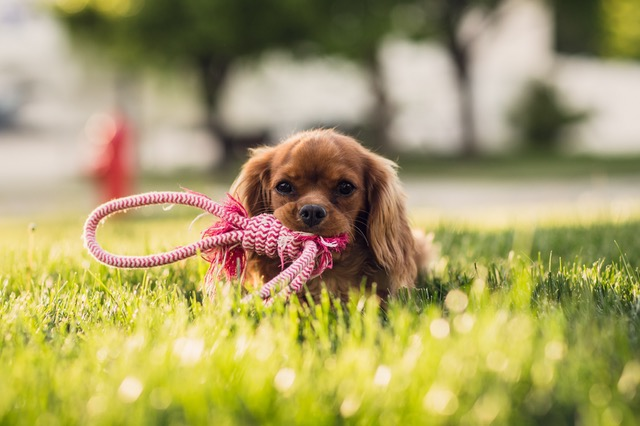 There's a lot to consider before bringing a new pet home. Here are 5 Important Things To Think About Before Getting A Puppy
