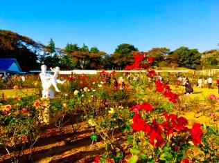 川崎 生田緑地ばら苑10