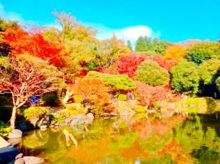 紅葉旧古河庭園〜ライトアップ六義園06