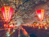 夜の目黒川桜03