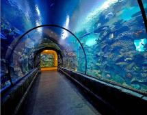Weekend Getaways Shark Reef Aquarium Las Vegas