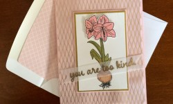Amaryllis Christmas Card - Rosanne Mulhern