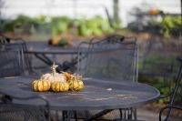 New Thanksgiving Traditions - Waldorf MD - Tri-County ...