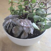 Succulent Repotting Project