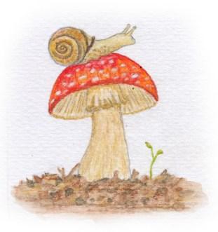 snail(12)