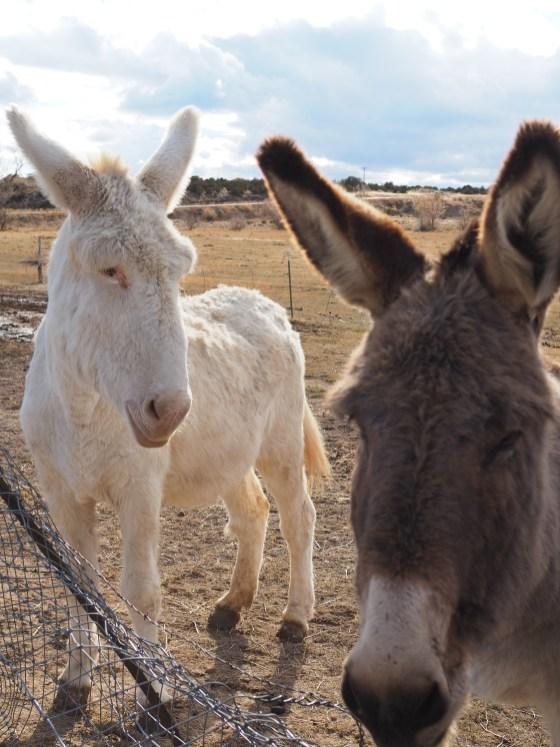 Yeti and Squatchy