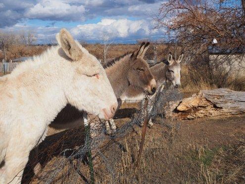 Yeti, Squatchy and Donkey Hoti