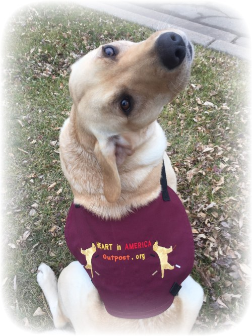 Rover Service Dog