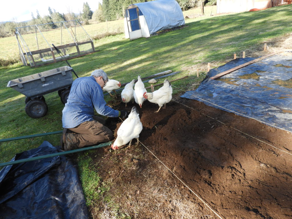 It all begins with the soil and the chickens help at Heartiness Approach