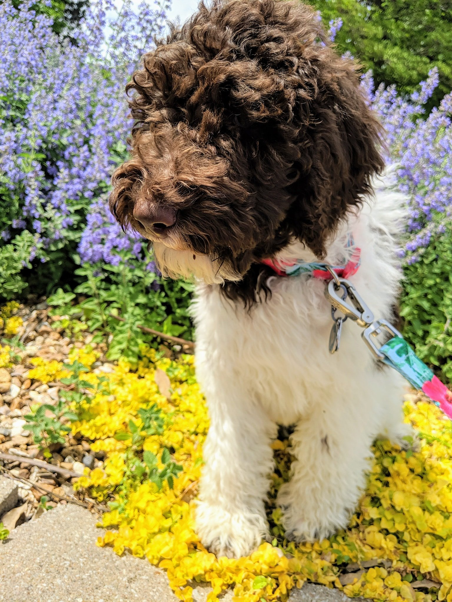 Abigail as a puppy sitting infront of flowers