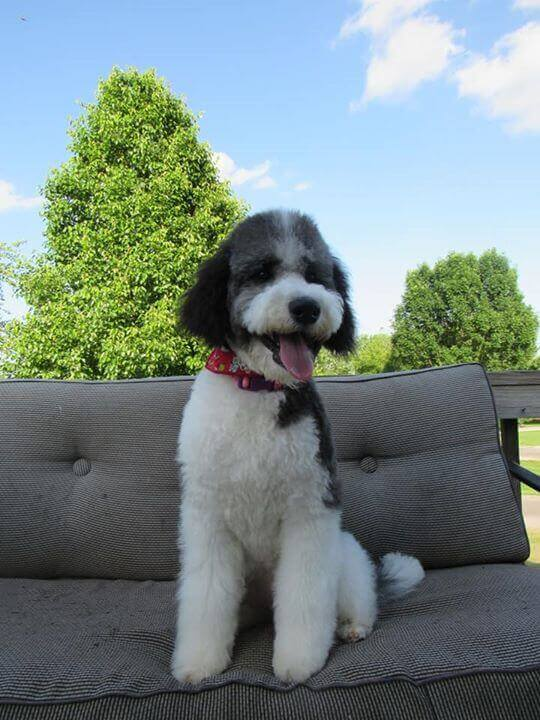 Madison sitting outside on an outdoor couch