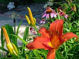 reddish orange, flame daylily