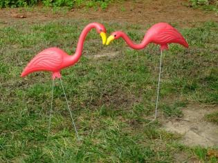 flamingos smooching in the yard!