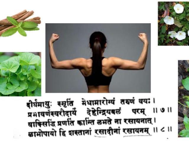 rasayana ou adaptogènes de l'ayurveda