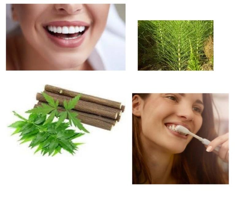 dents-brossage-équilibre-ayurveda-neem-prêle