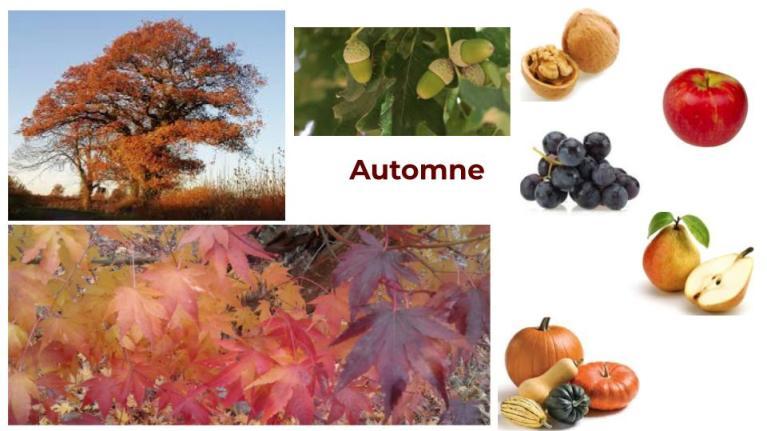 #automneayurveda #heartofayurveda #ayurveda#paris #sharat #saisonsayurveda #chêne